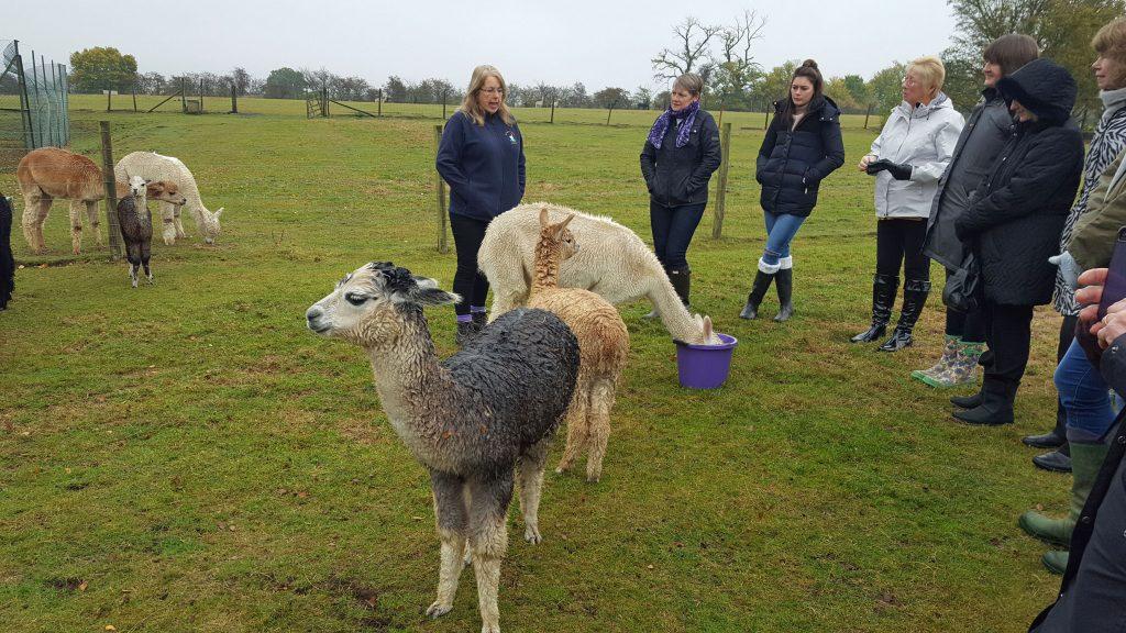 Alpaca Farm & shop visit - 10th November 2016